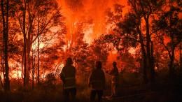 Buschfeuer südlich von Sydney zerstört Häuser