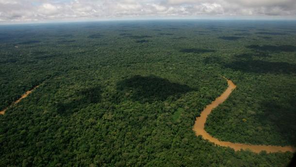 Keine Volksabstimmung über Ölförderung im Regenwald