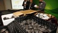 Schildkröten von illegalem Markt gerettet