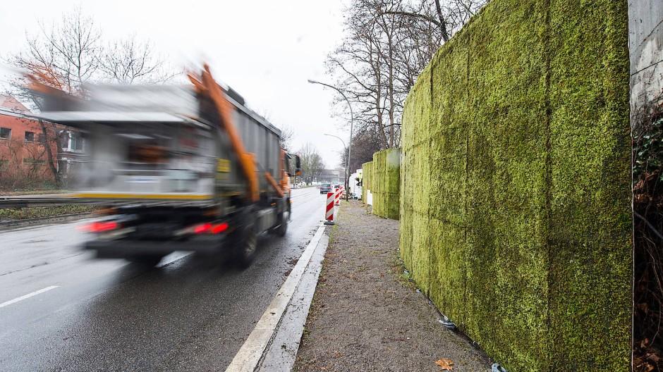 Für eine bessere Luft: Moos an Moos am Straßenrand