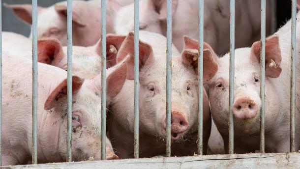 Tierwohlabgabe würde jeden Verbraucher 35 Euro im Jahr kosten