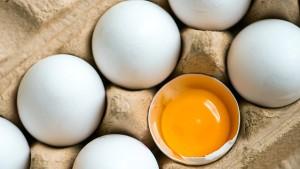 Eier aus fünf Supermarktketten mit Salmonellen befallen