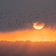 Schon das Flammeninferno des jüngsten Tages - oder nur ein imposanter Sonnenuntergang über Dresden?