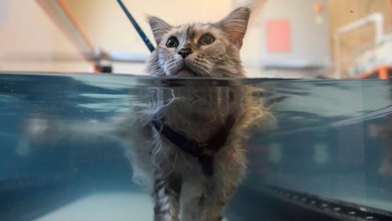 Luxus-Behandlungen für Haustiere