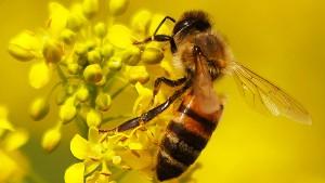 Letzte Chance für den Insektenschutz