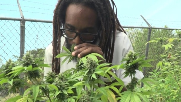 Kiffen wie Bob Marley