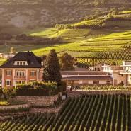 Swiss-Sherpa-Stiftung: Weinanbau für die Helden am Everest