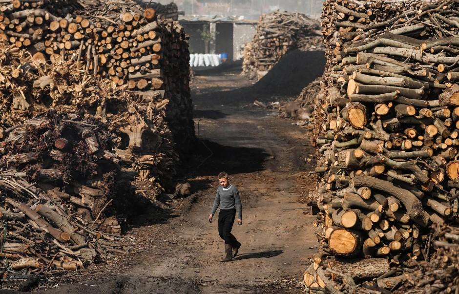 Ein Junge läuft durch das Holzlager der Köhler, in denen verschiedene Holzarten zum Trocknen gestapelt werden. Um Holz zu Kohle zu machen, darf es nicht mehr feucht sein.