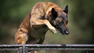 Schäferhund attackiert Kinder auf Spielplatz – Polizist setzt Waffe ein