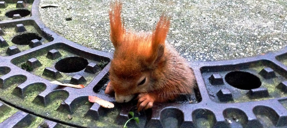 Eichhörnchen Spanisch
