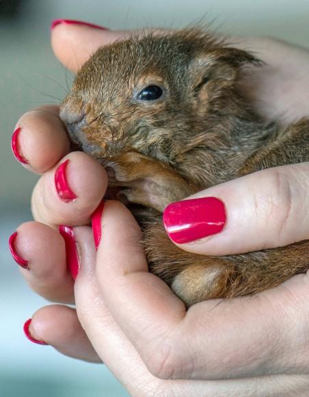 Bilderstrecke zu: Wildtiere als Haustiere: Mitten ins Menschenherz ...