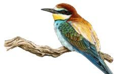 Alle Vögel sind schön da