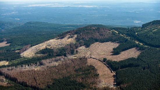 Finanzspritze gegen Waldsterben