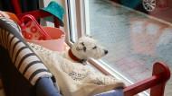 Frau B. sitzt gerne auf ihrer Bank im Schaufenster und beobachtet die Passanten.