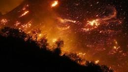 Der Busch brennt