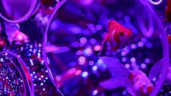 Wunderwelt der Goldfische