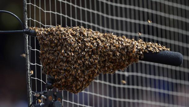 Bienenschwarm sorgt für Aufregung beim Baseball