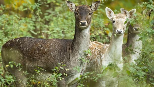 """Wilderer muss im Gefängnis """"Bambi"""" schauen"""