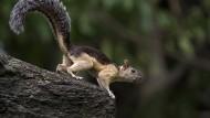 Exotische Bunt- und Schönhörnchen können Bornaviren auf Menschen übertragen. Und es gibt noch andere Infektionswege.