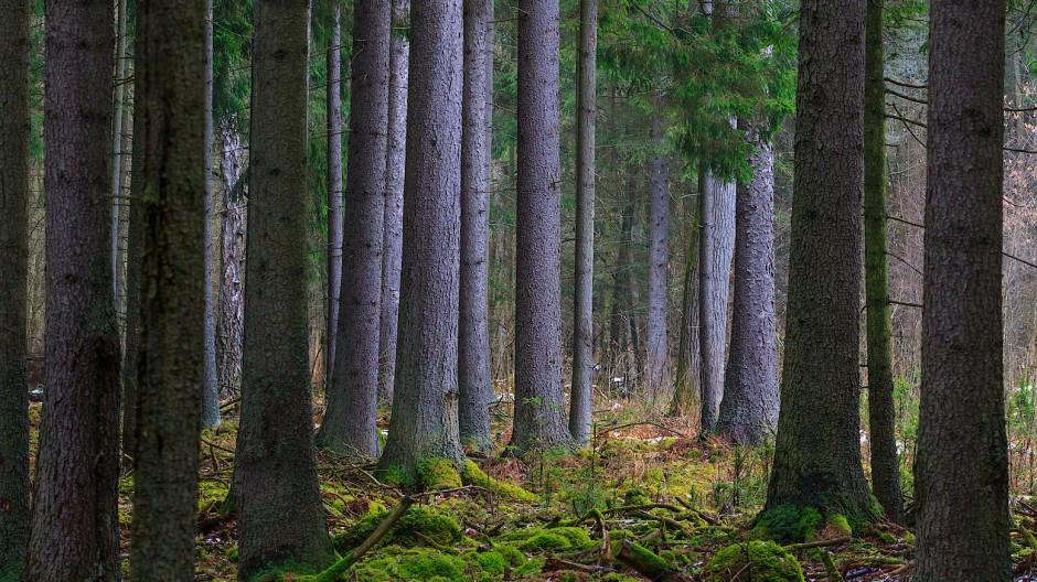 In Teilen des Schutzgebietes wird noch reguläre Forstwirtschaft betrieben.