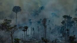 Wer rettet den Amazonas?