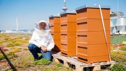 Die Biene und der Polizist