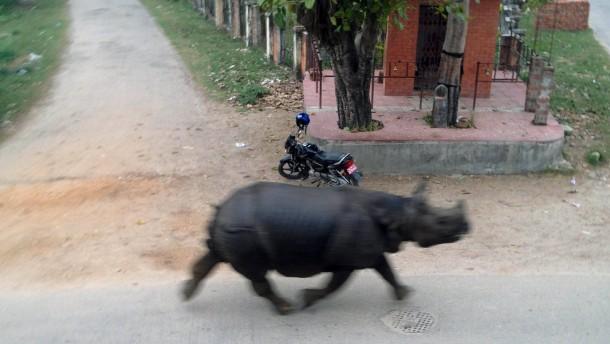 30. März 2015. In der nepalesischen Ortschaft Hetauda hat dieses entflohene Nashorn eingebaute Vorfahrt. Es ist aus einem Naturpark ausgebrochen und irrt nun durch die Straßen. Dabei sollen Menschen und Fahrzeuge zu Schaden gekommen sein.