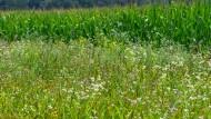 Honigtopf: Wer als Bauer solche Blühstreifen anlegt, erhält zusätzliche EU-Gelder dafür.