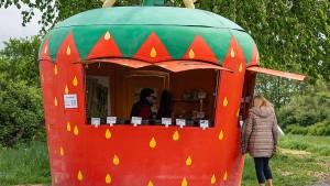 Budenzauber für Spargel und Erdbeeren