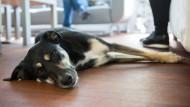 Sind Hunde gut fürs Geschäft?