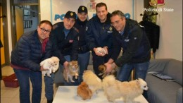 Hunde-Entführer in Sizilien geschnappt