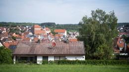 Nachbarn müssen Bäume an Grundstücksgrenze dulden
