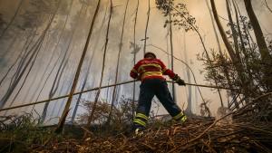 Portugal will weniger Eukalyptus anbauen