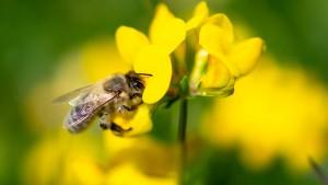 """""""Die eine Biene, der man hilft, rettet die Art nicht"""""""