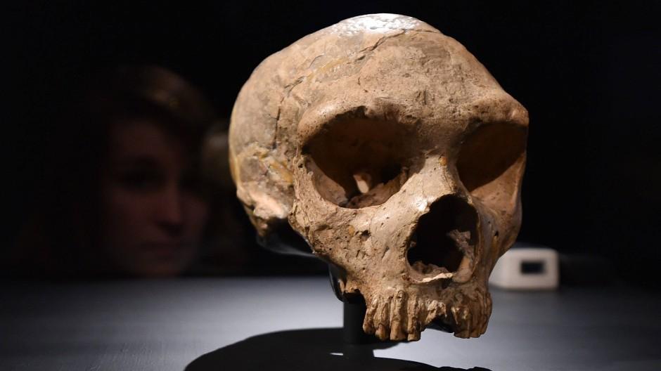 """1848 fand man den Schädel eines weiblichen """"Homo neanderthalensis"""". Nun gibt es auch Beweise für die Existenz eines """"homo floresiensis""""."""