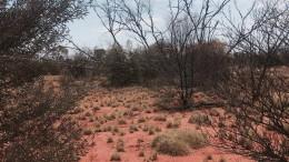 Zweiter Überlebender nach zwei Wochen im Outback gefunden