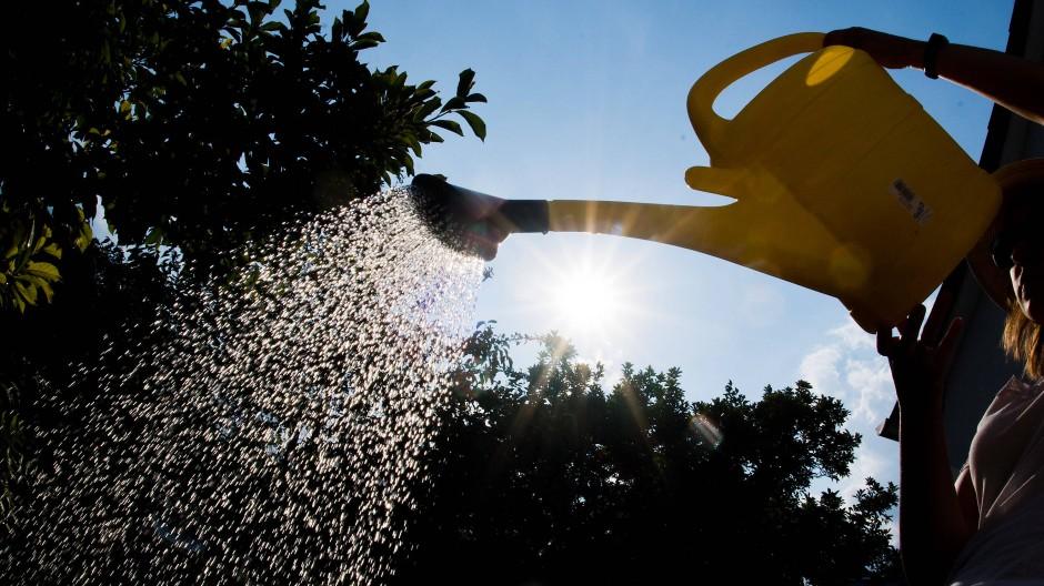 Egal, wie der Sommer 2020 entwickeln wird, sicher ist: Die meisten Pflanzen brauchen sehr viel Wasser.