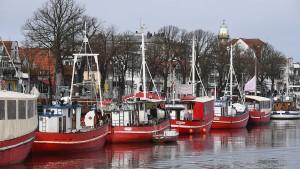Experten raten zu Fangstopp für Hering