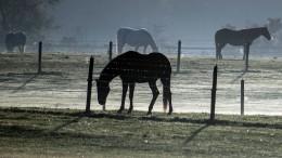 Feuerwehr rettet Pferd und findet Waffen