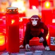 Zwei Tage nach dem Brand im Affenhaus des Krefelder Zoos steht ein Stofftieräffchen neben Trauerkerzen.