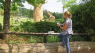 Jennifer Gübert bei der Arbeit: Vieles, was Doktoranden der Zoobiologie über die Tiere im Opel-Zoo lernen, geht auf ausdauernde Beobachtung zurück.