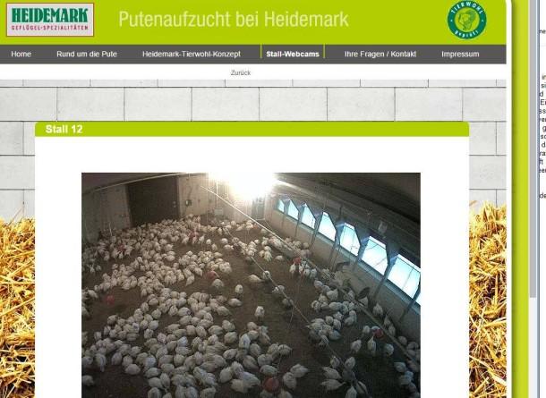 Webcam online leben