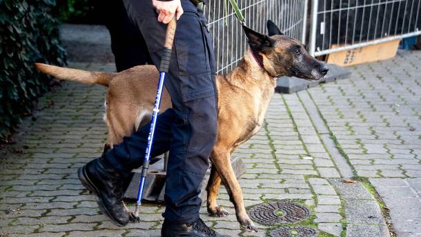 """Polizeihund """"Ilox"""" stellt flüchtigen Beifahrer"""