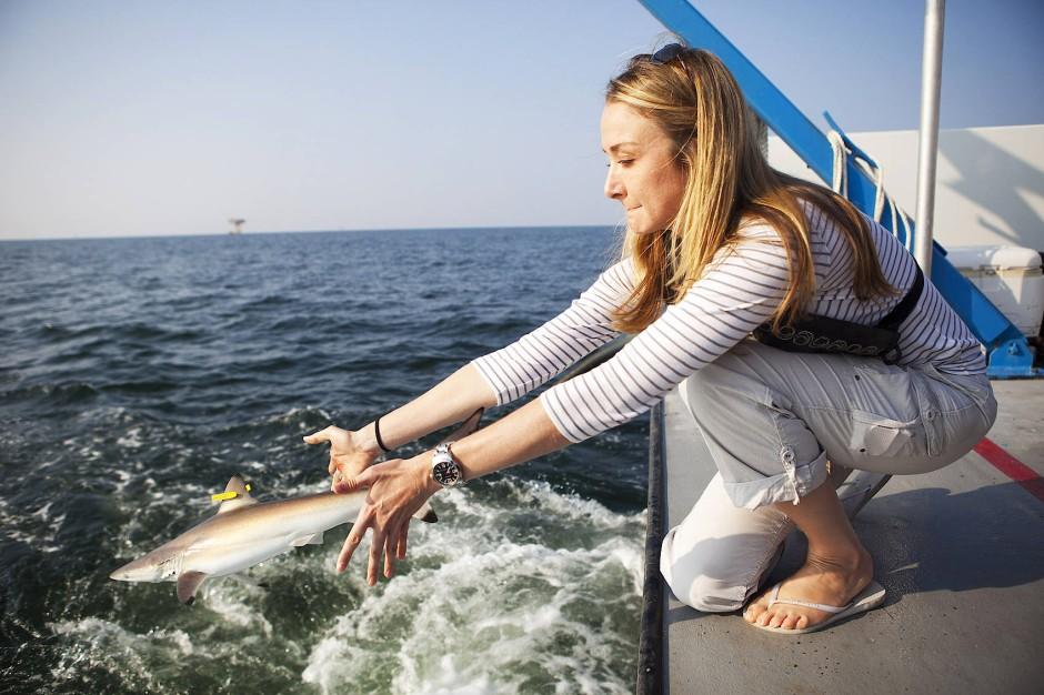 Alexandra Cousteau wirft einen Spinnerhai zurück ins Wasser, der auf einem Forschungsschiff vor der Küste Alabamas zuvor mit einem Chip getaggt worden ist.