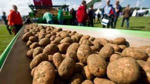 In Deutschland werden die Kartoffeln knapp