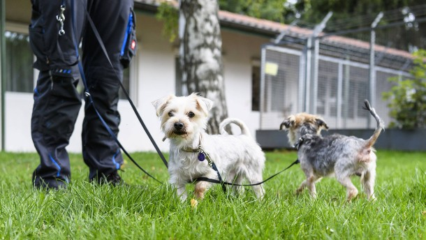 Weniger Steuern für einen Tierheimhund