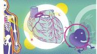 Das Herz ist unter allen Organen das Unverzichtbarste. Denn pumpt es nicht Blut in alle Winkel unseres Körpers, kann kein anderes Organe seine Arbeit tun.