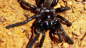 Älteste Spinne der Welt stirbt an Wespenstich