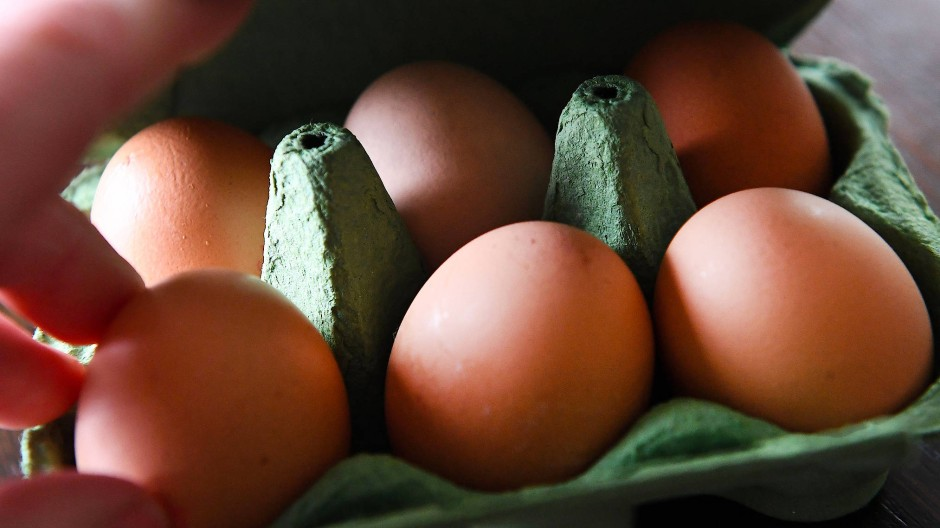 Eier-Skandal: Kein Fund von Fipronil in hessischen Betrieben