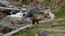 Wenn der Bär beißt